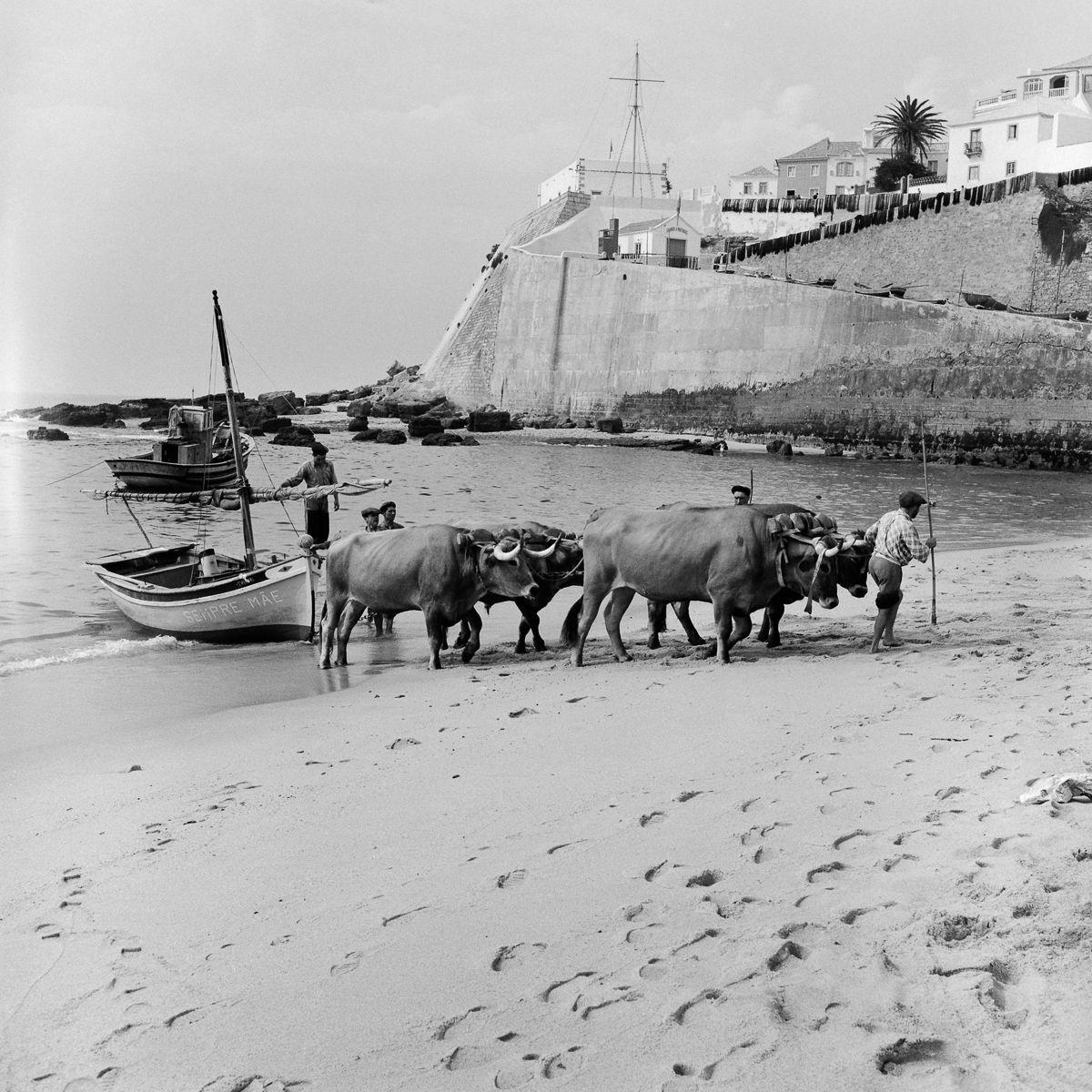 Fotografias deslumbrantes capturam a cultura da pesca dos anos 50 em Portugal 20