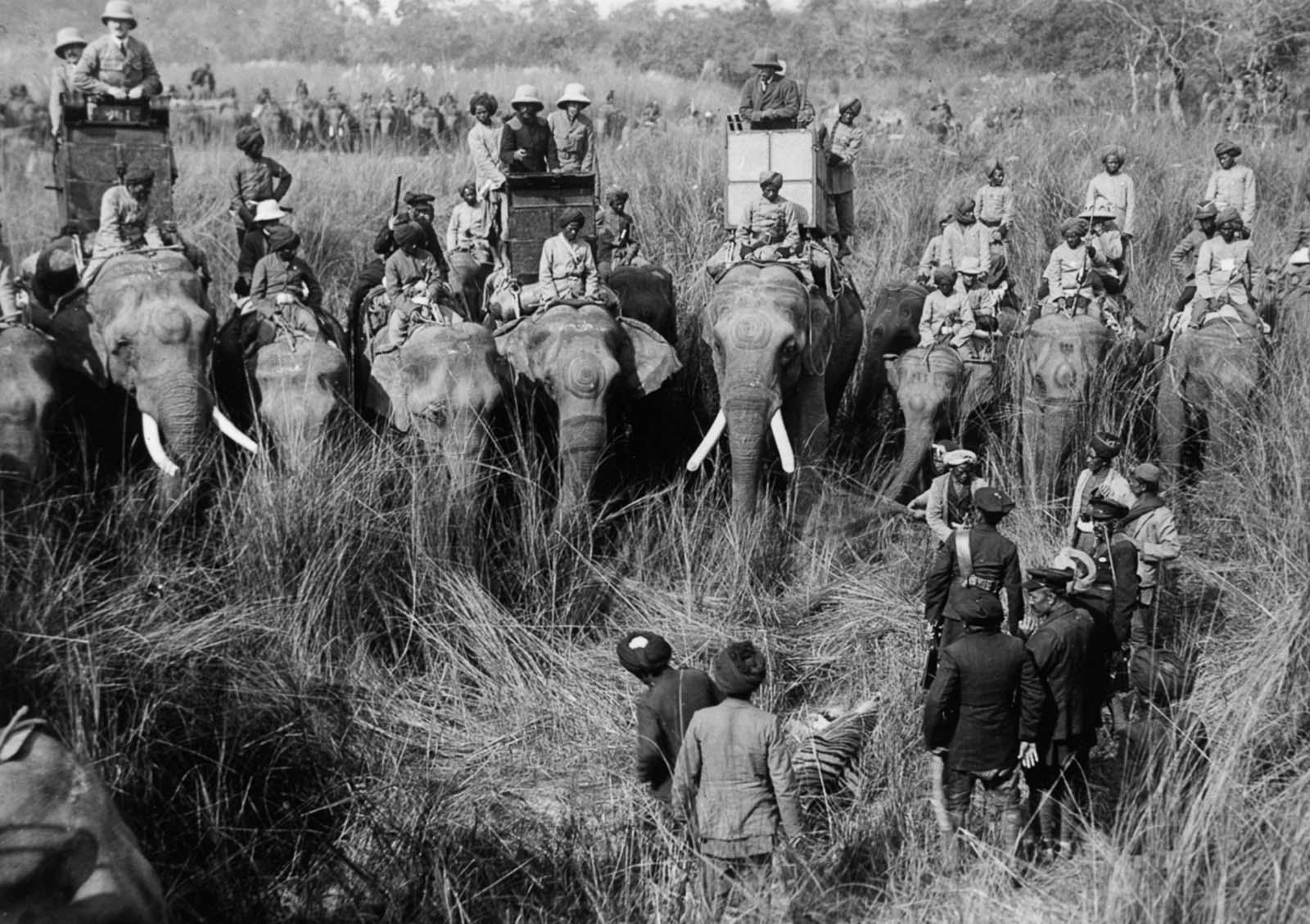 Em 1911 a realeza britânica foi à Índia para ser coroada e aproveitou para caçar 11