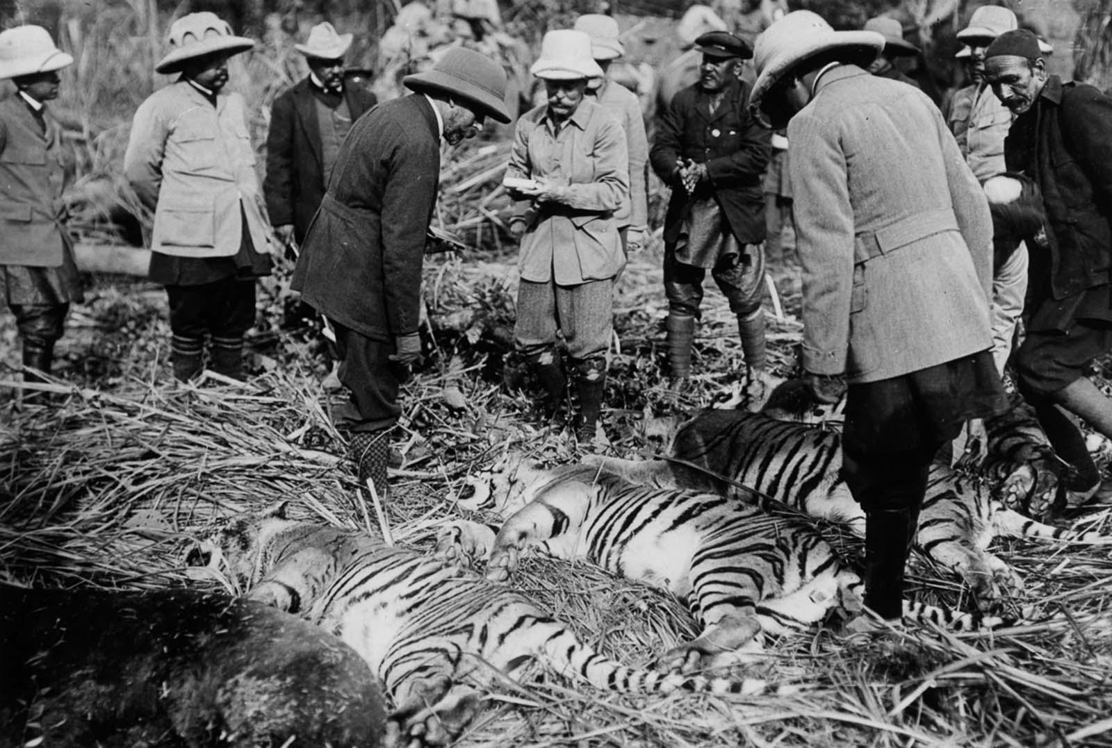 Em 1911 a realeza britânica foi à Índia para ser coroada e aproveitou para caçar 14