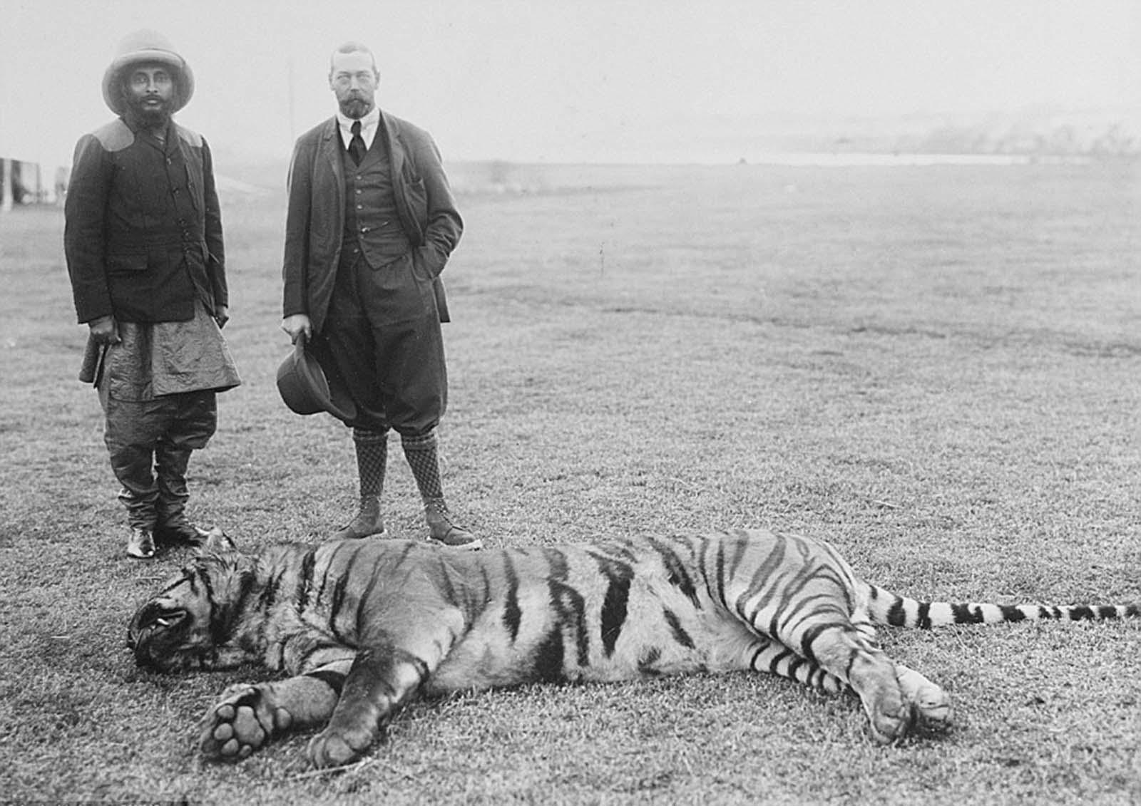 Em 1911 a realeza britânica foi à Índia para ser coroada e aproveitou para caçar 20