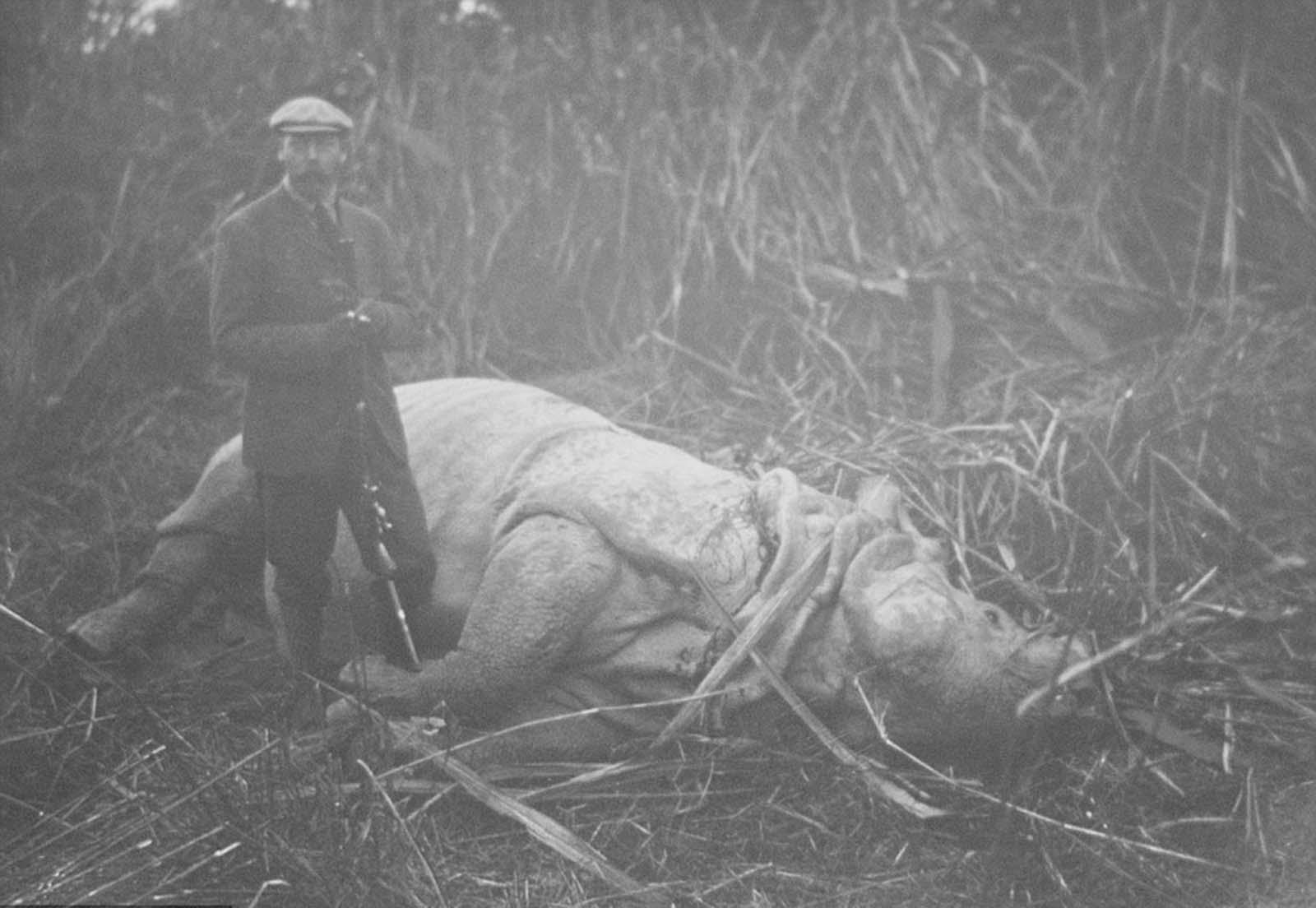 Em 1911 a realeza britânica foi à Índia para ser coroada e aproveitou para caçar 21
