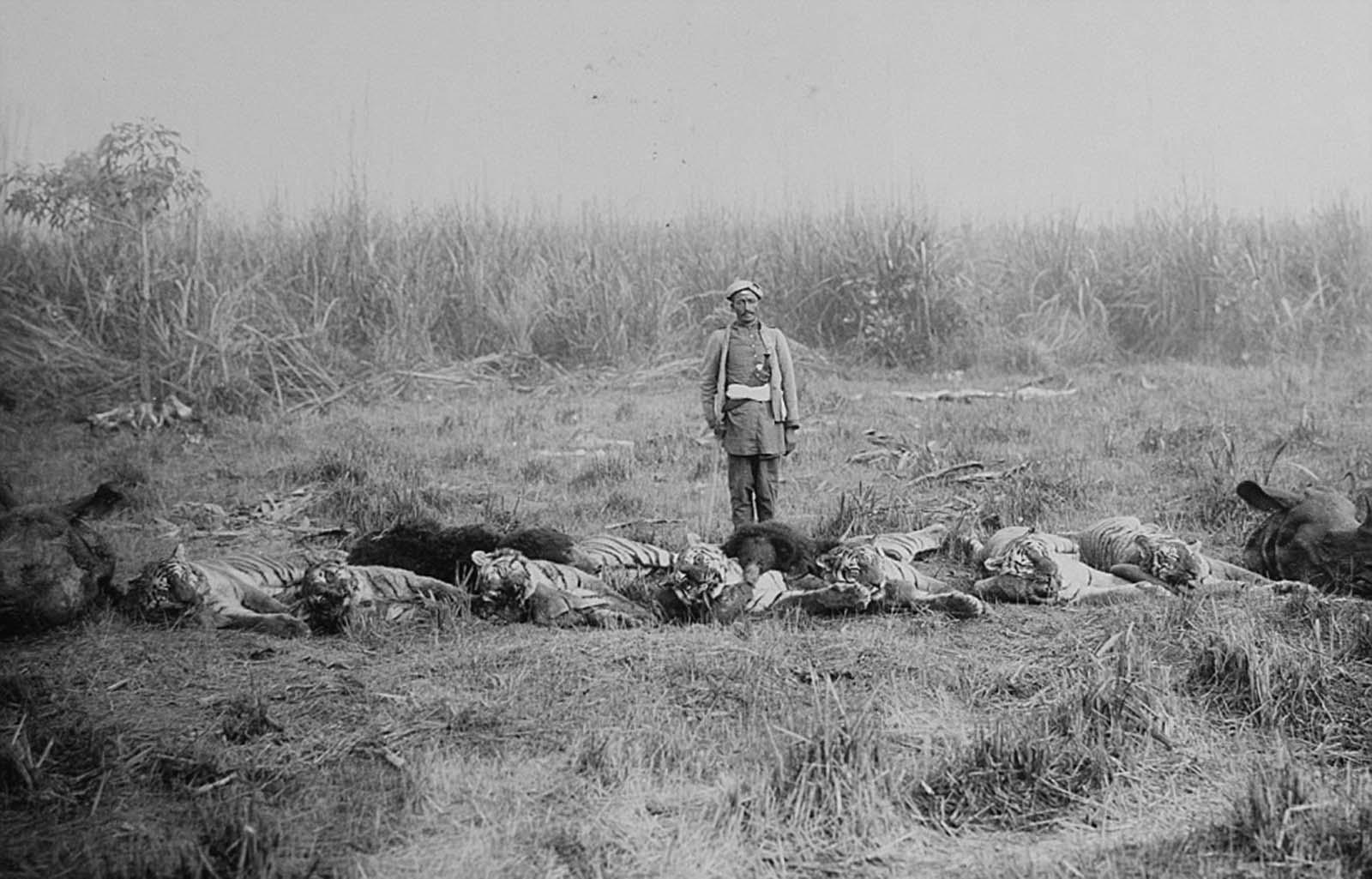 Em 1911 a realeza britânica foi à Índia para ser coroada e aproveitou para caçar 22
