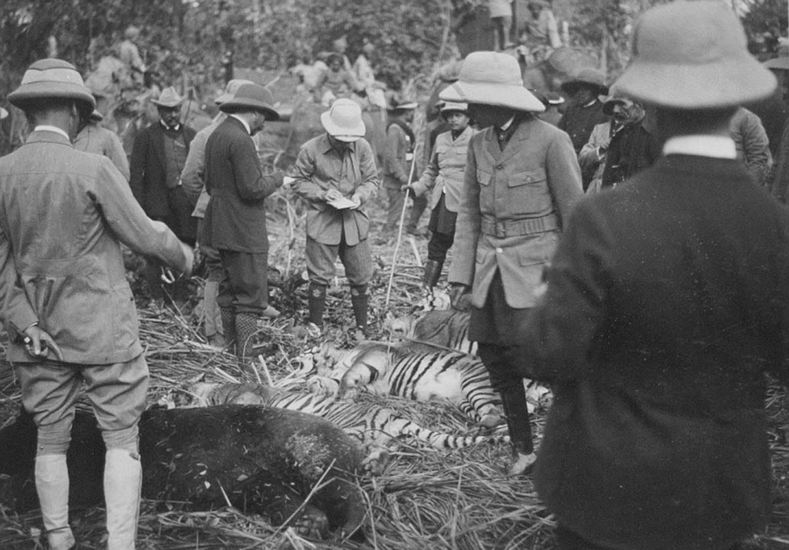 Em 1911 a realeza britânica foi à Índia para ser coroada e aproveitou para caçar 24
