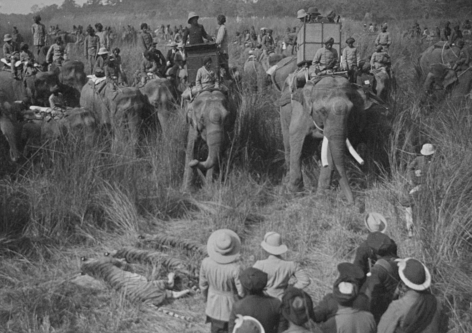 Em 1911 a realeza britânica foi à Índia para ser coroada e aproveitou para caçar 25