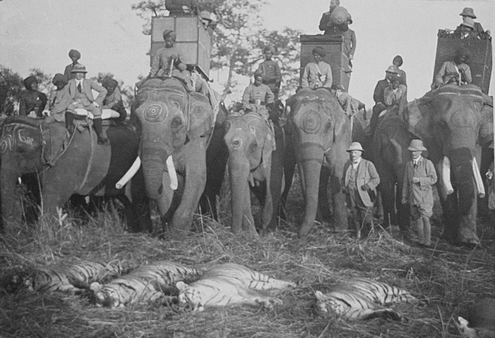 Em 1911 a realeza britânica foi à Índia para ser coroada e aproveitou para caçar 26