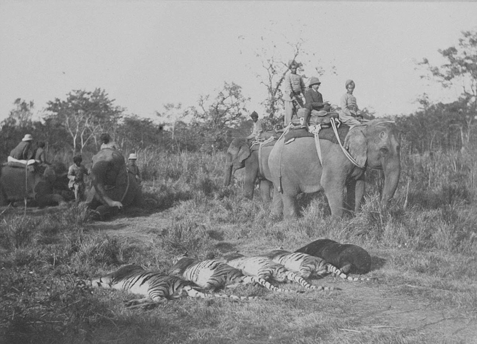 Em 1911 a realeza britânica foi à Índia para ser coroada e aproveitou para caçar 27