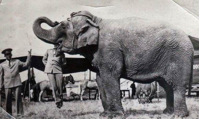 Fotos antigas estranhas e engraçadas 4 44