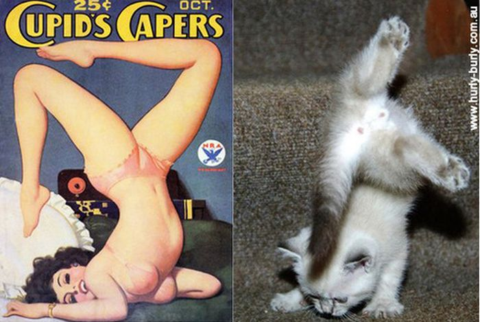 Gatos que parecem com pin-ups 02