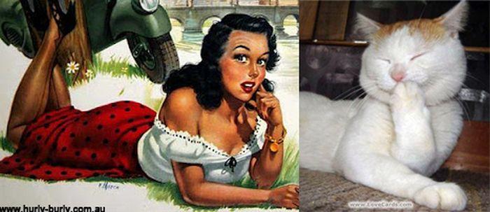 Gatos que parecem com pin-ups 03