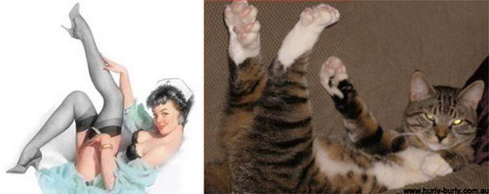 Gatos que parecem com pin-ups 04
