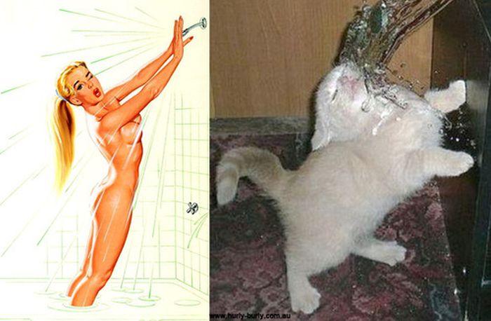 Gatos que parecem com pin-ups 07