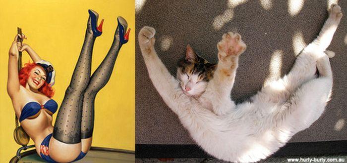Gatos que parecem com pin-ups 12