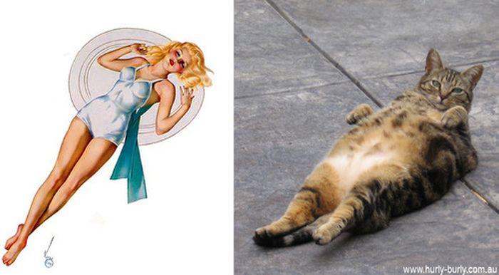 Gatos que parecem com pin-ups 14