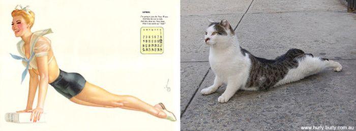 Gatos que parecem com pin-ups 18