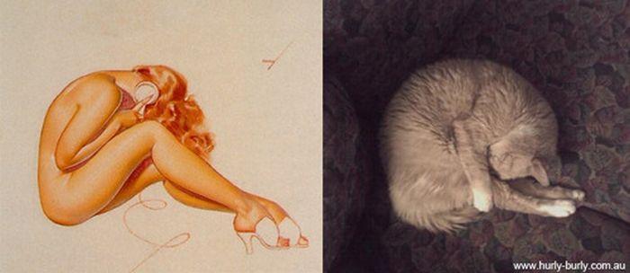 Gatos que parecem com pin-ups 19
