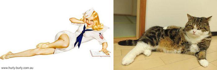 Gatos que parecem com pin-ups 20