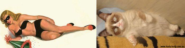 Gatos que parecem com pin-ups 30