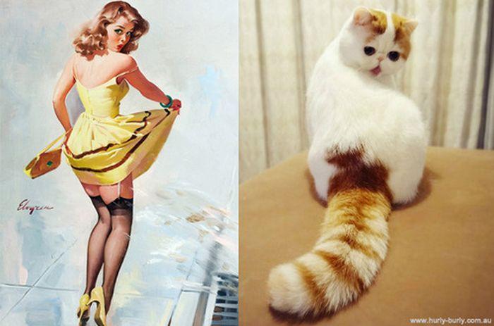 Gatos que parecem com pin-ups 32