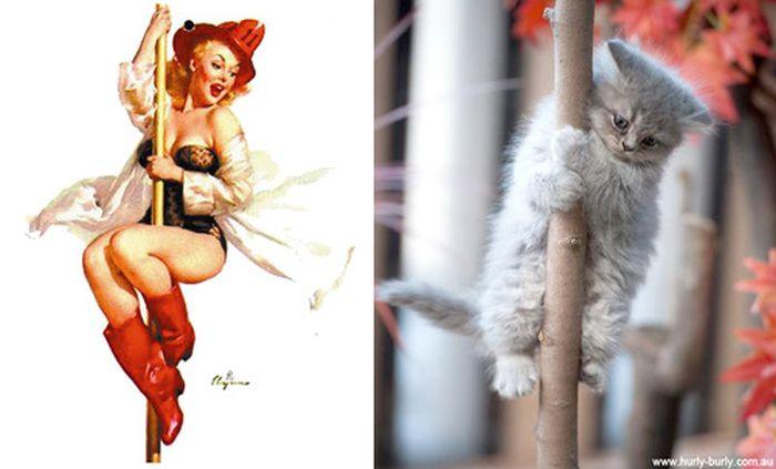 Gatos que parecem com pin-ups 34