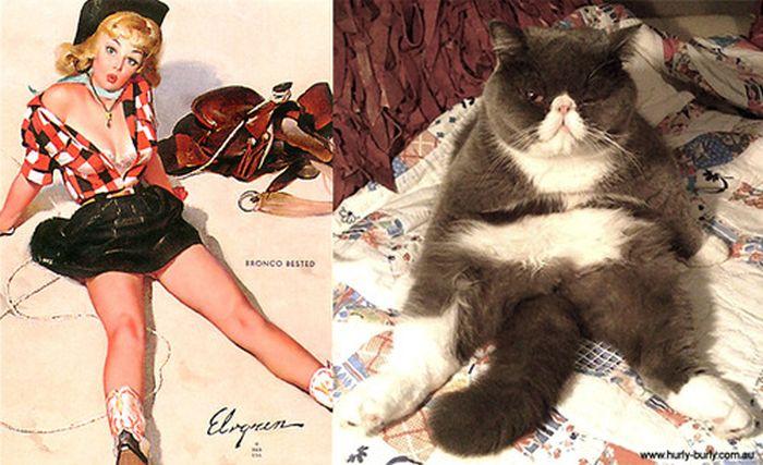 Gatos que parecem com pin-ups 37