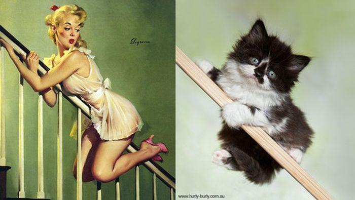 Gatos que parecem com pin-ups 39