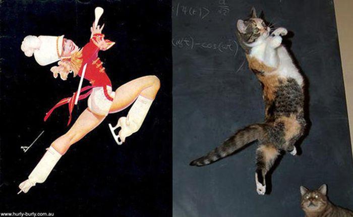 Gatos que parecem com pin-ups 43