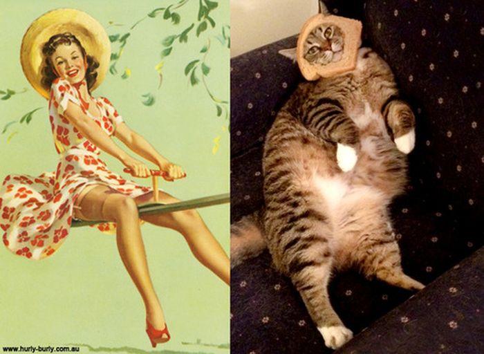 Gatos que parecem com pin-ups 46