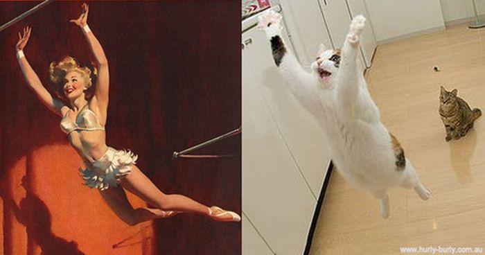Gatos que parecem com pin-ups 48