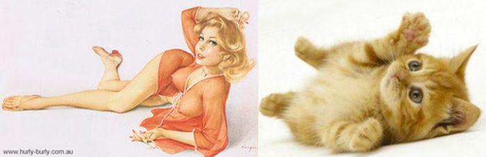 Gatos que parecem com pin-ups 49
