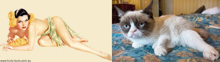 Gatos que parecem com pin-ups 51