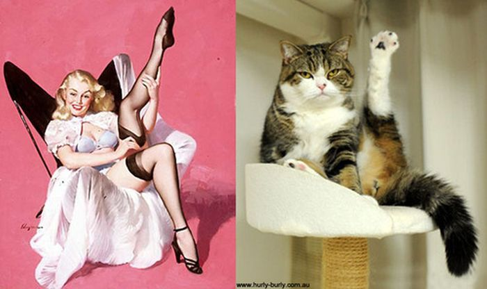 Gatos que parecem com pin-ups 54
