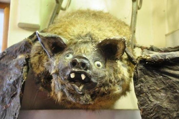 O pior da taxidermia 3 25