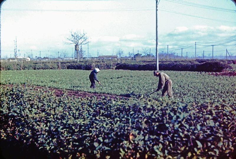 A vida no Japão no pós-Segunda Guerra Mundial através de imagens coloridas fascinantes 10