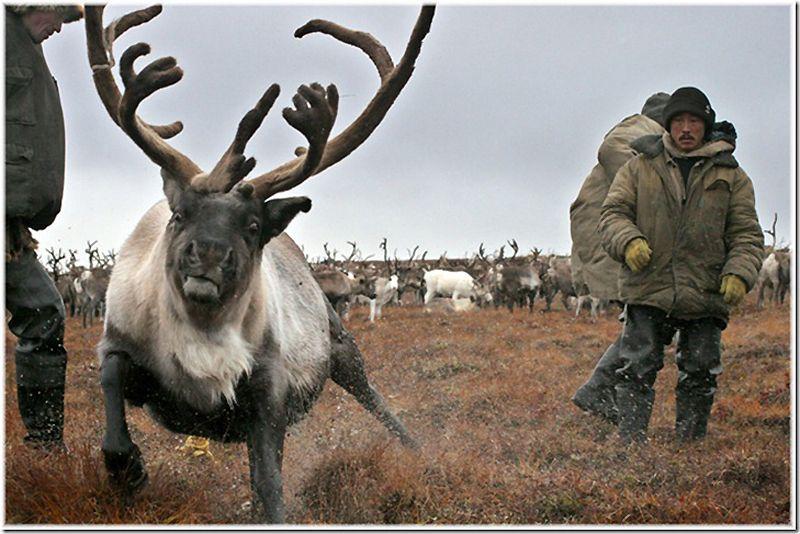 Um passeio por Chukotka 14