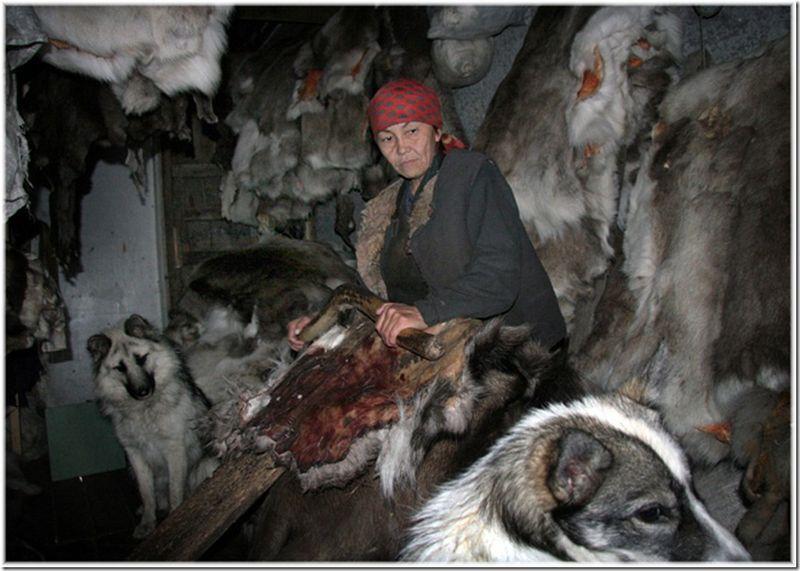 Um passeio por Chukotka 16