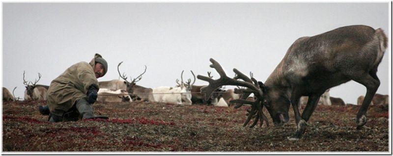 Um passeio por Chukotka 17