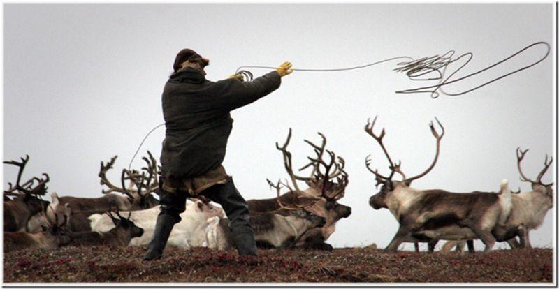 Um passeio por Chukotka 18