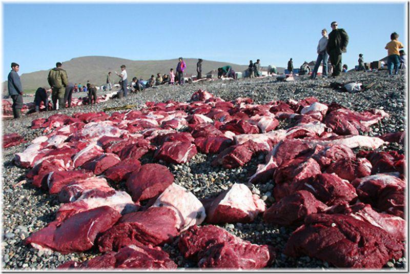 Um passeio por Chukotka 25