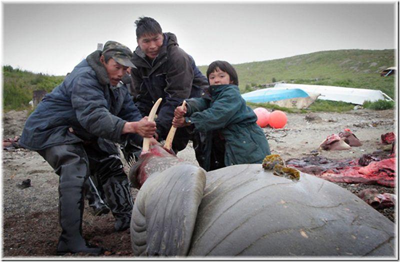 Um passeio por Chukotka 36