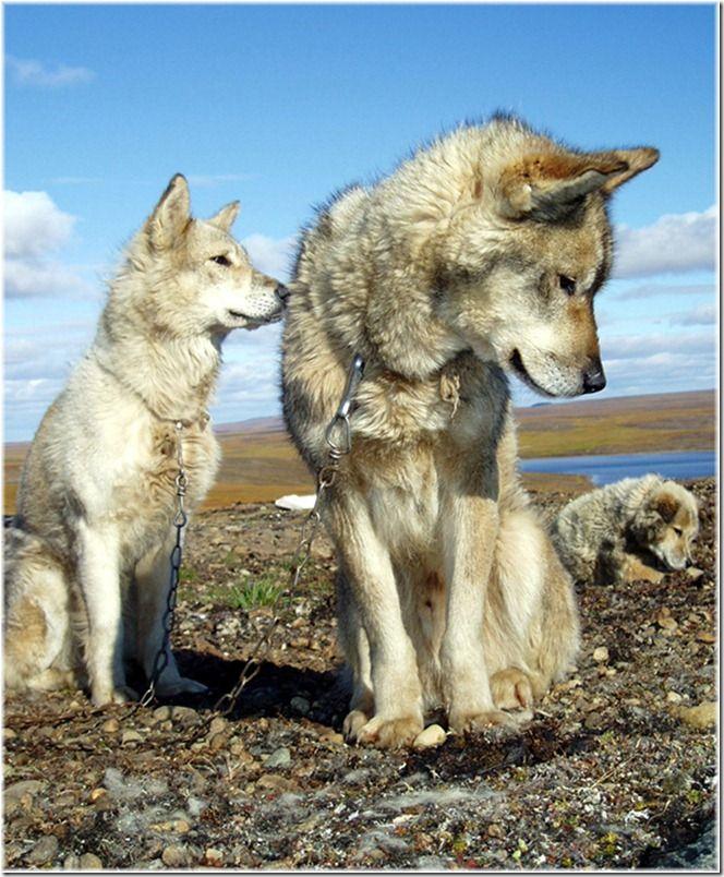 Um passeio por Chukotka 40