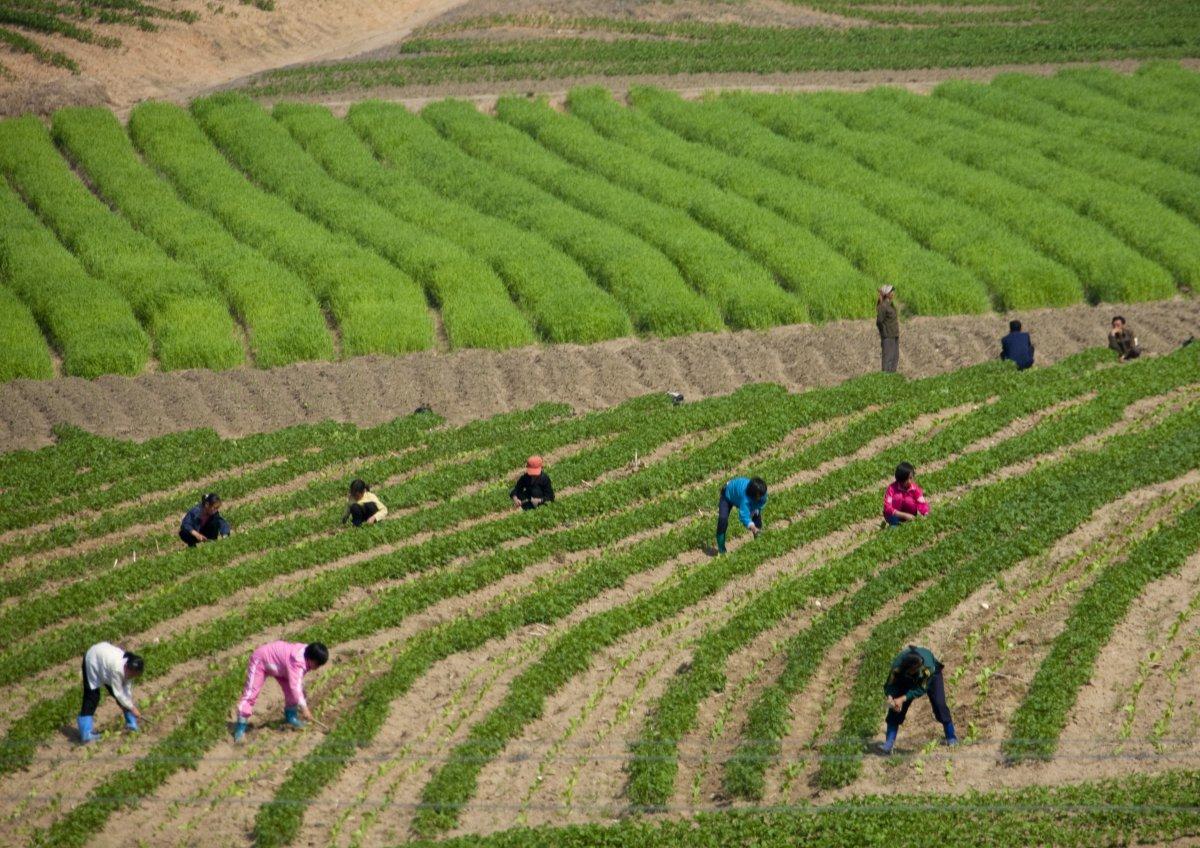 As fotos mais simpáticas da Coreia do Norte que você já viu 21