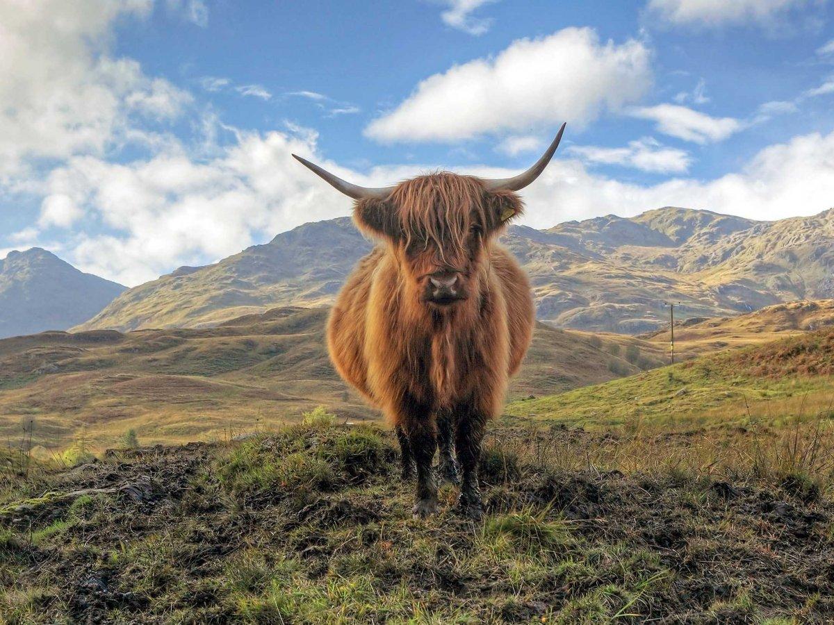 23 fotos que vão fazer você querer visitar a Escócia 06