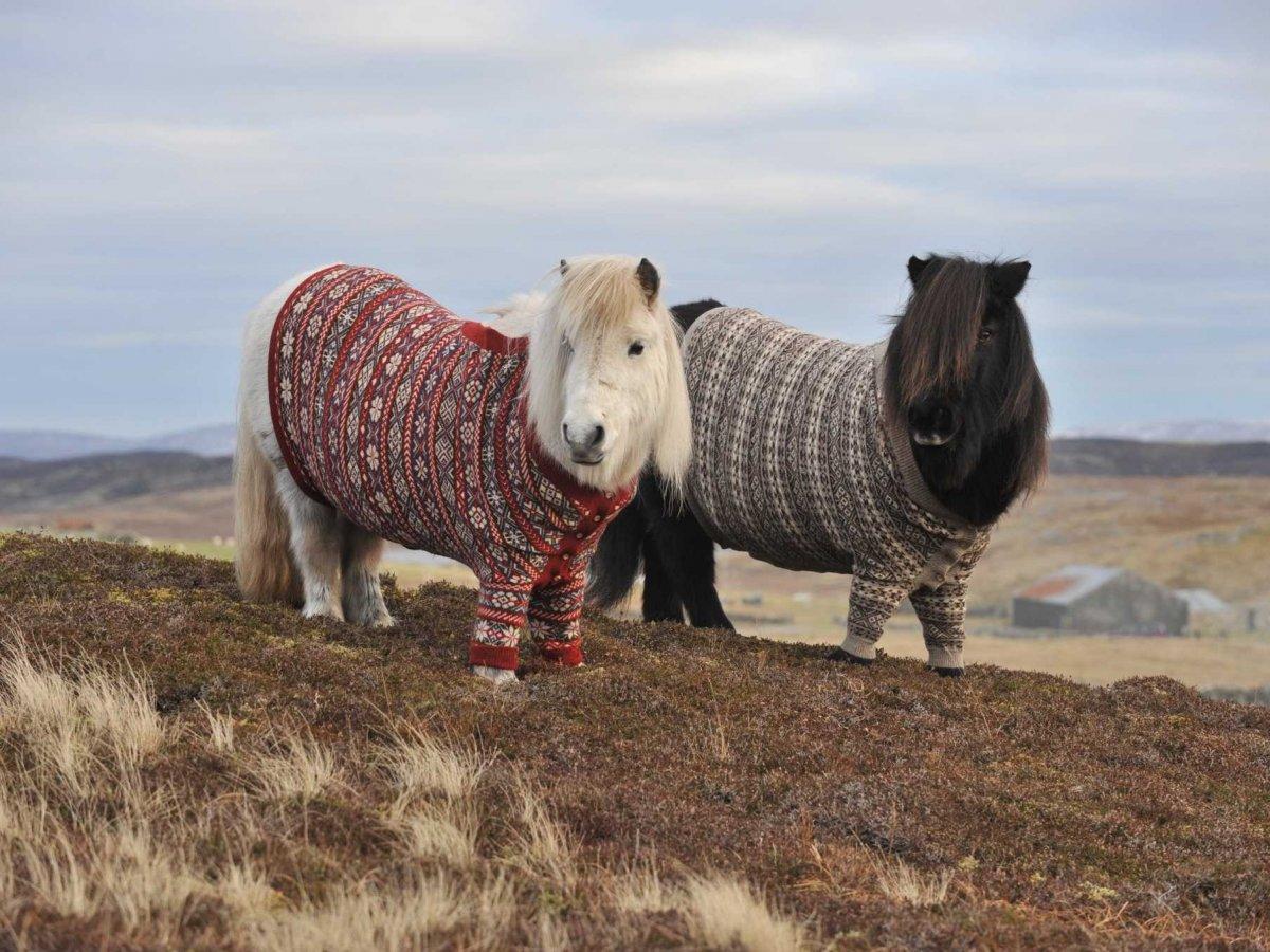 23 fotos que vão fazer você querer visitar a Escócia 15