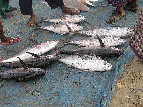Pescadores somalis 19