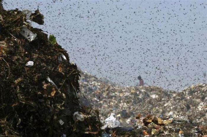 A poluição do lixo ao redor do mundo 22
