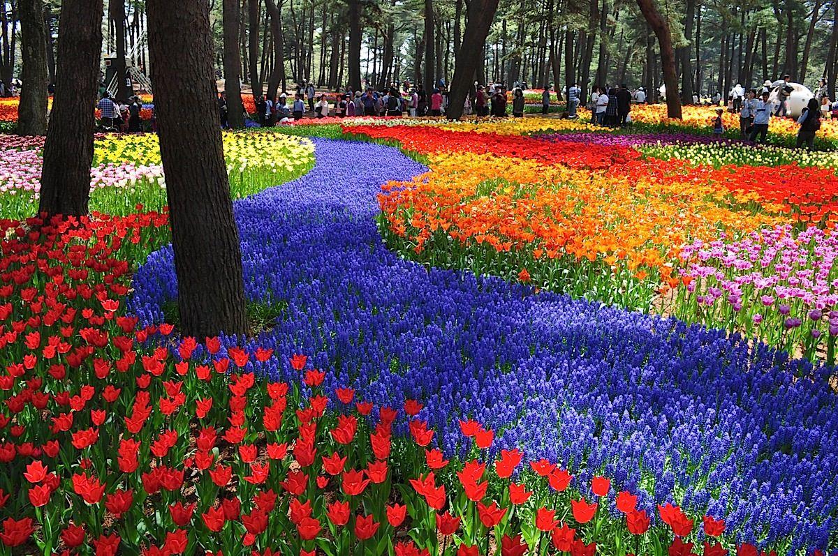 Na primavera, este parque japonês se transforma em um mar de flores azuis 16