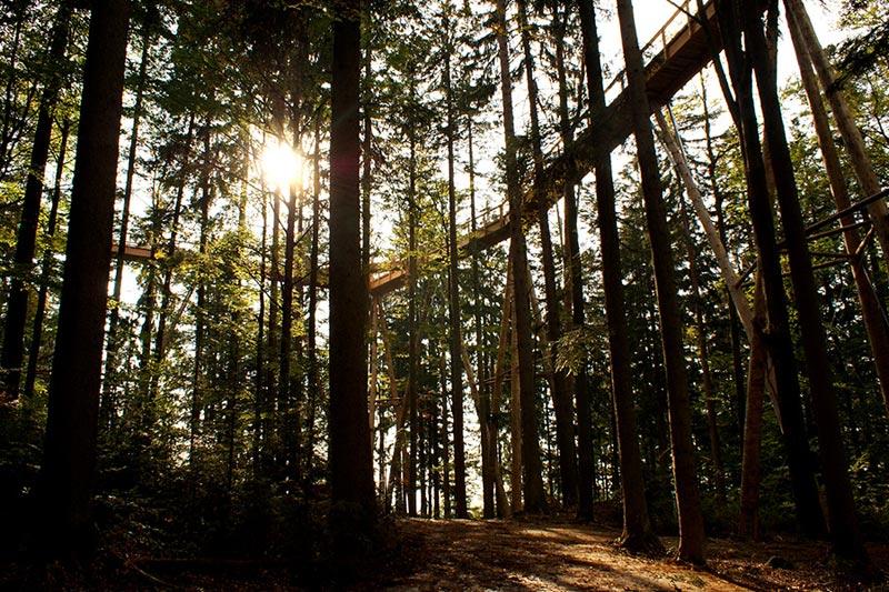 A mais longa caminhada até o topo das árvores do mundo 03