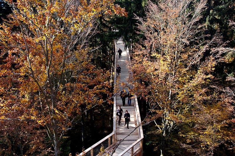 A mais longa caminhada até o topo das árvores do mundo 04