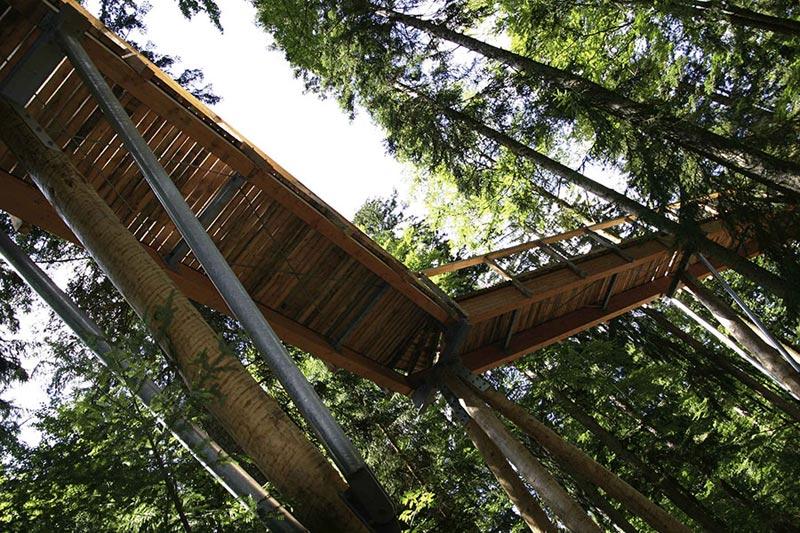 A mais longa caminhada até o topo das árvores do mundo 09