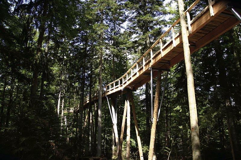 A mais longa caminhada até o topo das árvores do mundo 19